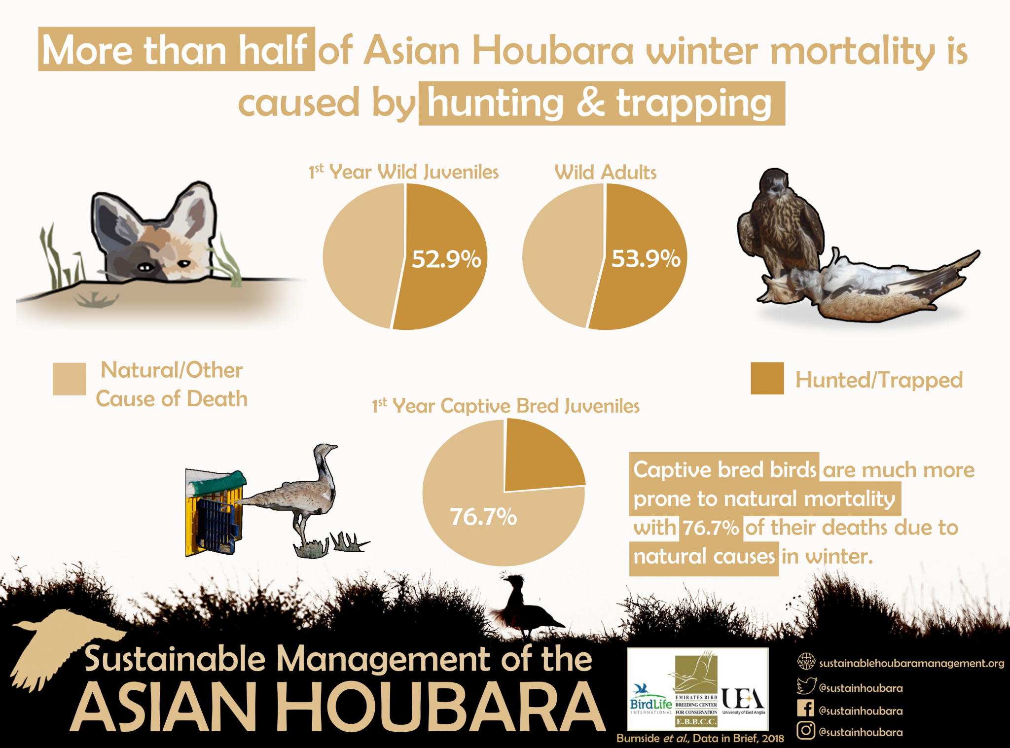 Infographic of Houbara Mortality Causes